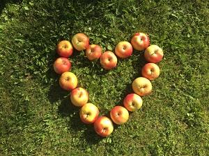 Ali eno jabolko na dan zares prežene zdravnika stran – kopija